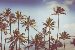 Wijnoogst gestemd beeld van palmensilhouetten tegen zonsopgang Stock Afbeeldingen