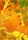 Wijnoogst gestileerd frame - wijnstokdruiven royalty-vrije stock foto's