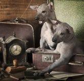 Wijnoogst gestileerd puppyportret Stock Afbeeldingen