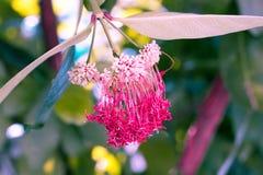 Wijnoogst weinig rode bloempastelkleur aan Creatief patroon royalty-vrije stock foto