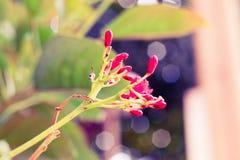 Wijnoogst weinig rode bloempastelkleur aan Creatief patroon en t royalty-vrije stock afbeeldingen