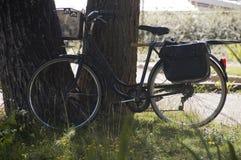 Wijnoogst zoals fiets langs een boomboomstam Royalty-vrije Stock Afbeeldingen