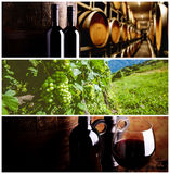 Wijnproductie Stock Afbeelding