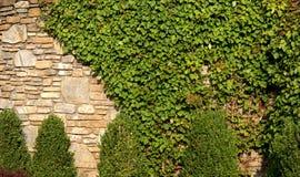 Wijnstok behandelde rotsmuur Royalty-vrije Stock Foto's