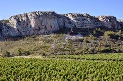 Wijnstok dichtbij van Narbonne in Frankrijk royalty-vrije stock fotografie