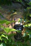 Wijnstok en lantaarn in de Provence Stock Foto