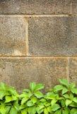 Wijnstok en Muur Stock Foto