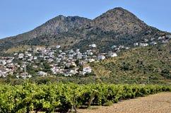 Wijnstok in het gebied van Rozen in Spanje Stock Foto