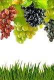 Wijnstok op wit close-up als achtergrond Stock Foto's