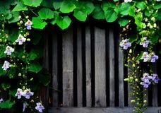 Wijnstok van bloem Stock Fotografie