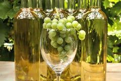 Wijnstokglas Stock Afbeelding