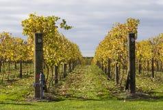 Wijnstokken 02 van de herfst Royalty-vrije Stock Foto