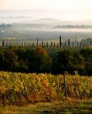 Wijnstokken in de Mist Stock Afbeelding