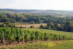 Wijnstokken dichtbij Auxerre Bourgondië Frankrijk royalty-vrije stock afbeeldingen