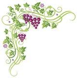 Wijnstokken, druiven Stock Afbeelding