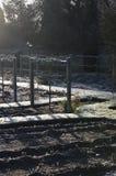 Wijnstokken in een vegatable tuin Stock Foto's