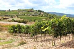 Wijnstokken en heuvels in Toscanië Stock Afbeelding