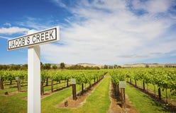 Wijnstokken in Jacobs Creek Winery Stock Foto