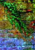 Wijnstokken langs Muur Royalty-vrije Stock Foto