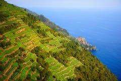 Wijnstokken op de helling in Italië stock fotografie