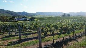 Wijnstokken op landbouwbedrijf royalty-vrije stock afbeelding