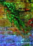 Wijnstokken op Muur royalty-vrije stock afbeeldingen