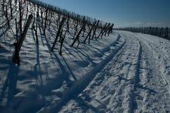 Wijnstokken in sneeuw in de winter Stock Foto
