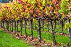 Wijnstokken van de wijnmakerijen royalty-vrije stock afbeeldingen
