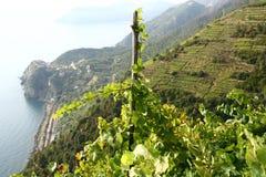 Wijnstokwerf door het overzees Stock Afbeelding