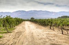 Wijnstokwerven in Cafayate Royalty-vrije Stock Afbeelding