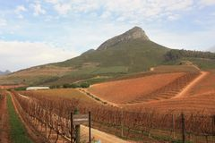 Wijnstokyard Stellenbosch Southafrica Delaire Graff royalty-vrije stock afbeeldingen