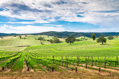 Wijnvallei in Barossa Royalty-vrije Stock Fotografie
