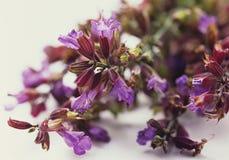 Wijze bloemen Royalty-vrije Stock Afbeeldingen