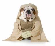 Wijze hond Stock Foto