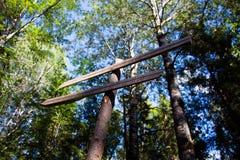 Wijzer op de sleep in het bos Stock Afbeeldingen
