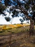 wiktoriański winnica zdjęcie royalty free
