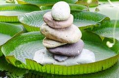 Wiktoria, amazonki Wodnej lelui liście z kamieniem góruje Obraz Stock