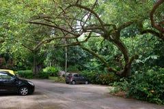 Wiktoria ogródy botaniczni (Mont Fleuri ogródy botaniczni Seychelles) fotografia royalty free