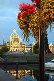Wiktoria półmrok i kwiaty, kolumbiowie brytyjska Zdjęcie Stock