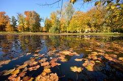 Wilanow宫殿-池塘在公园 免版税图库摄影