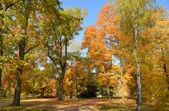Wilanow宫殿-秋天树在公园 免版税图库摄影