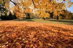 Wilanow宫殿-秋天树在公园 免版税库存图片