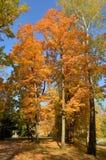 Wilanow宫殿-秋天树在公园 免版税库存照片