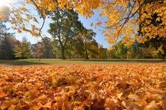 Wilanow宫殿-秋天树在公园 库存照片