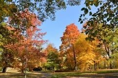 Wilanow宫殿-秋天树在公园 库存图片
