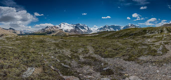 Wilcox Pass Panorama Royalty Free Stock Images