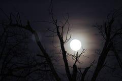 Wilcza księżyc z nagimi gałąź, horyzontalnymi Fotografia Stock
