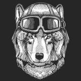 Wilczy jest ubranym lotnika kapelusz Druk dla dzieci odziewa, trójnik, koszulka Pilotowy dzikie zwierzę obraz royalty free