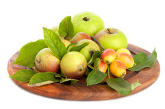 wild äpplefruktträdgård Fotografering för Bildbyråer