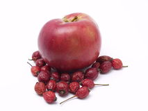 wild äpplerose Arkivfoton